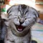cat jokes laughing