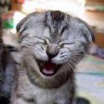 barzellette gatto che ride