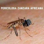 nero di whatsapp pericolosa zanzara africana