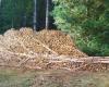 wood pile art 1