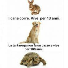 confronto vita animali lepre cane tartaruga