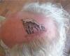 tatuaggi folli capra